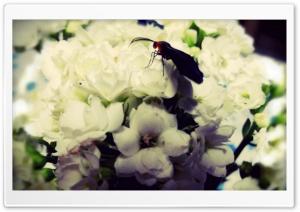 Black Moth II