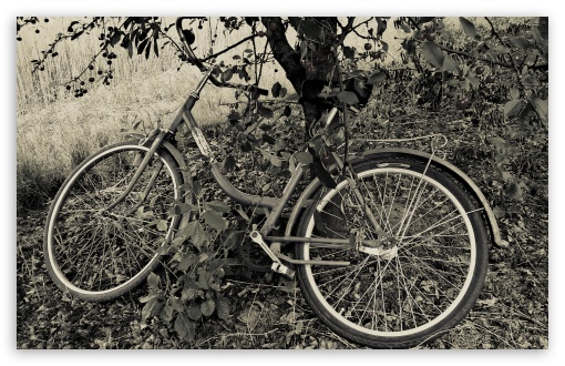 Download Bicycle Under The Cherry Tree UltraHD Wallpaper