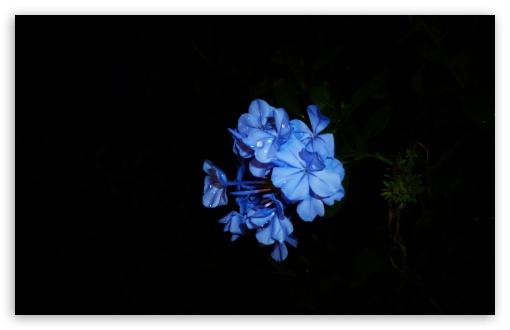 Download Flowers UltraHD Wallpaper
