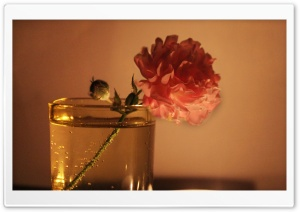 Flowers, Candle Lights