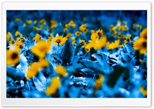 Flowers With Blue Leaves
