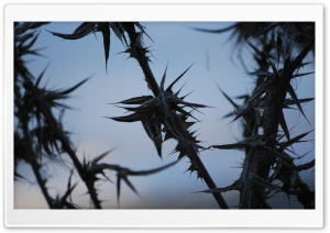 Prickly Silhouette