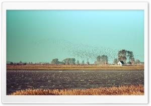 Flock of Birds, Fischland...