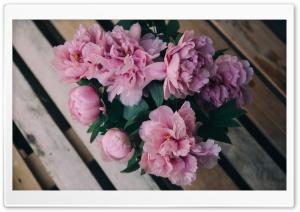 Pink Peonies Flowers in Vase