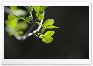 Branch Macro