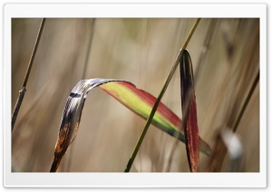Colorful Frond