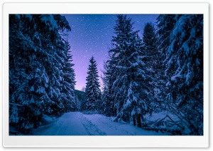 Fir Tree Forest, Snow,...