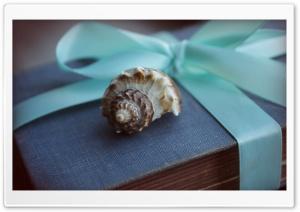 Shell And Blue Ribbon