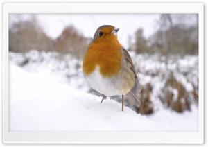 Small Bird In Snow