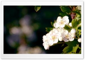 Close-Up Of A Blossom Tree...