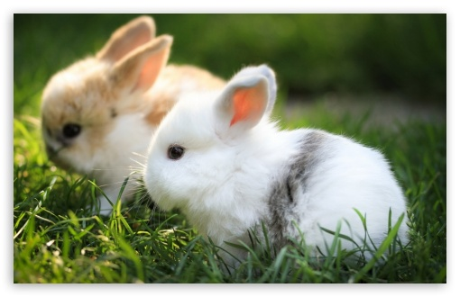 Download Cute Bunnies UltraHD Wallpaper