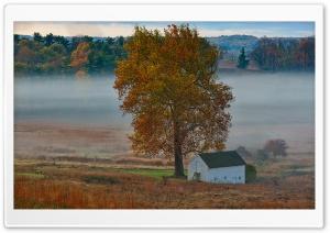 Autumn Mist, Yellow Tree,...