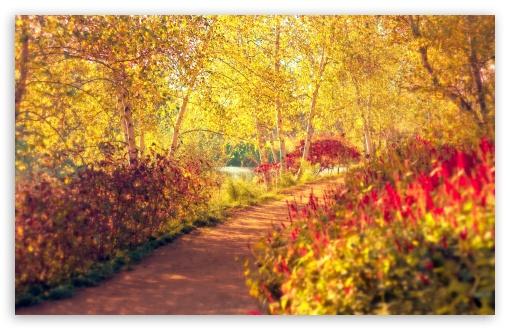 Download Autumn Pathway UltraHD Wallpaper