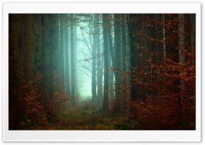 Forest, Trees, Footpath, Fog,...