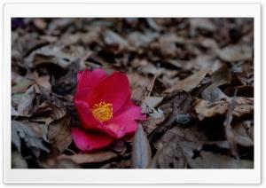 Last Summer Flower