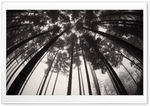 Forest Trees Black and White