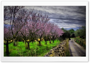 Almond Orchard HDR