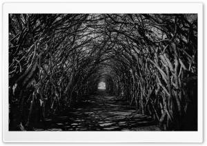 Dark Hedge Tunnel Spooky