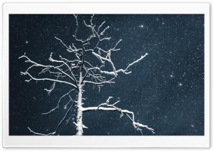 Tree, Night Sky, Lapland