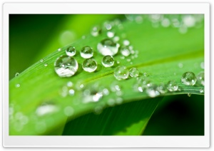 Shiny Water Drops