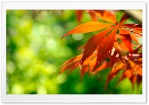 Orange Fall Leaves Against A...