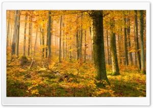 German Forest In Autumn