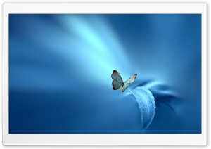 Butterfly, Blue Background