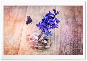 A Spring Hyacinth Flower In...