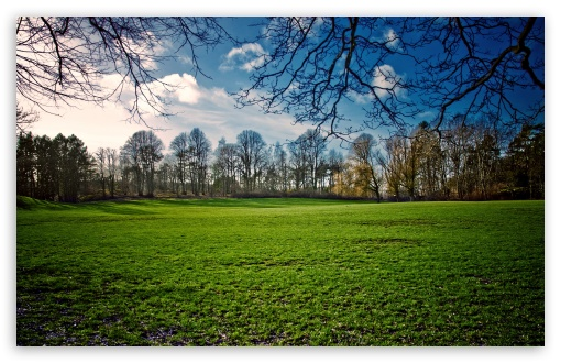 Download Beautiful Meadow, Spring UltraHD Wallpaper