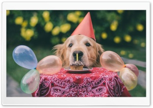 Cute Dog Birthday