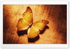 Beautiful Butterfly On Wood