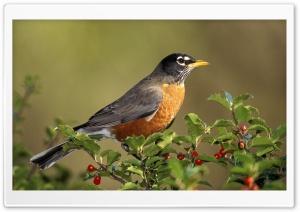 Animals Birds Bird On Branch