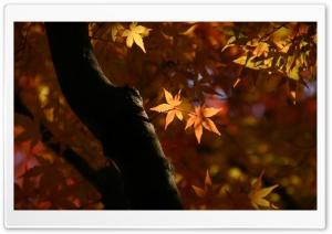 Tree Trunk, Autumn