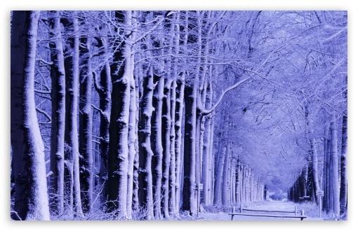 Download Snowy Trees UltraHD Wallpaper
