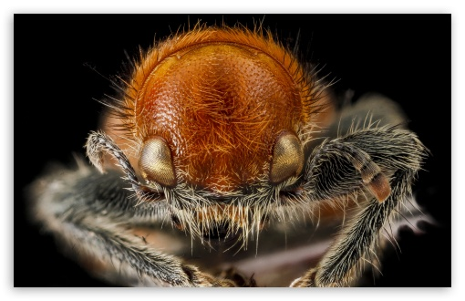 Download Beetle Macro Photography UltraHD Wallpaper