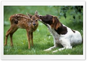 Dog Licking Fawn