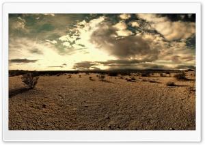 The Desert Tortoise Natural Area