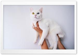 Cool White Cat