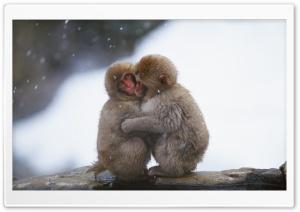 Macaques Hug