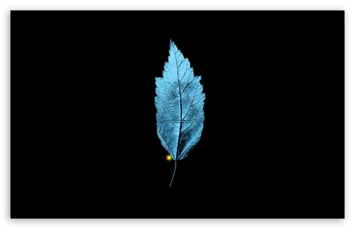 Download Fringe TV Series   A Leaf With An Embedded... UltraHD Wallpaper