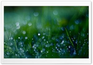 Fresh Green Grass Bokeh