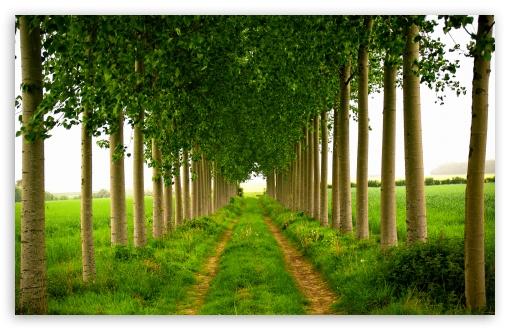 Download Green Leafage, Summer UltraHD Wallpaper