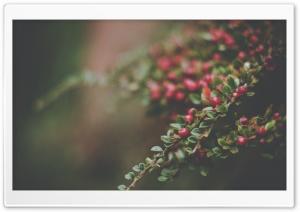 Berries Bush, Bokeh