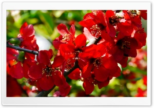 Branches with Red Flowers