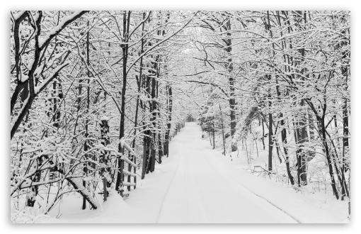 Download Snowy Trees, Rural Road, Winter UltraHD Wallpaper