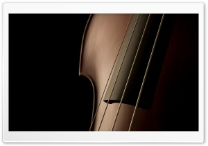Double Bass Close Up