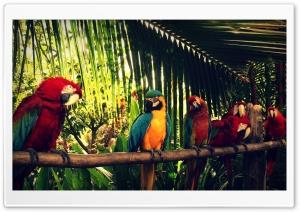 Royal Parrot