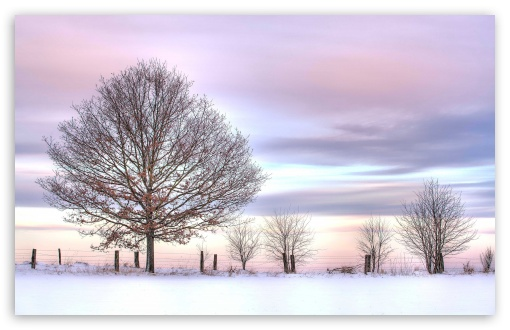 Download Trees And Fence, Winter UltraHD Wallpaper