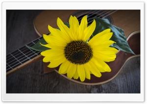 Sunflower, Acoustic Guitar