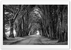 Country Road, Aligned Trees,...